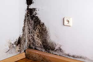 Humidity and Mold